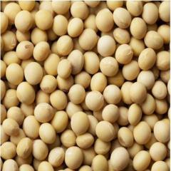 NOn-GMO Dried Soyabeans