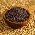 Mustard seeds, Brassica junsea